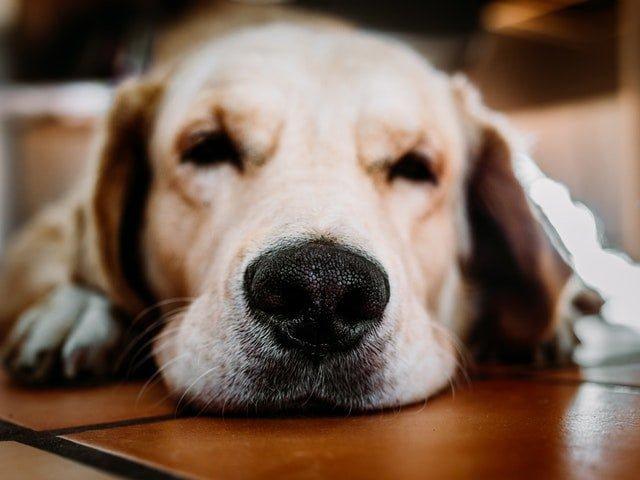 Hundemassage – gør det overhovedet en forskel?