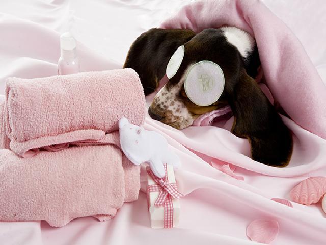 Sådan vasker og plejer du din hund med en god hundeshampoo