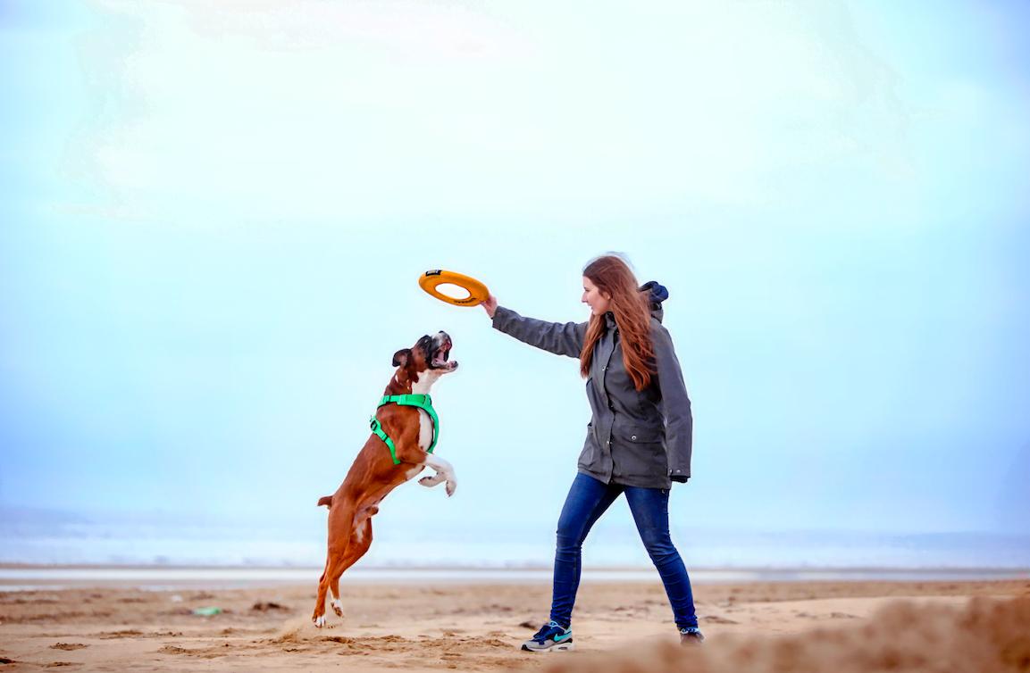 Den perfekte hundesele