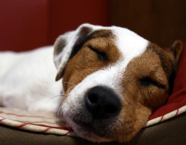 Hjælp din hund til et godt besøg hos dyrlægen