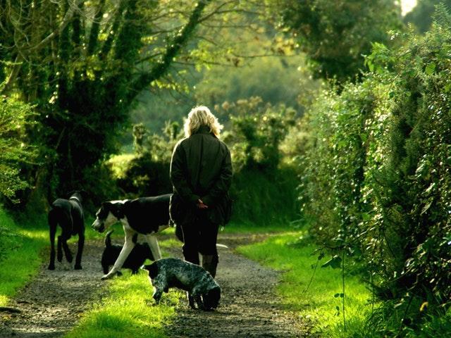 Hundepasning – hvor skal mine hunde passes?