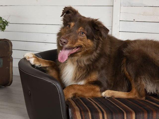 Scruffs Regent sofa, brun