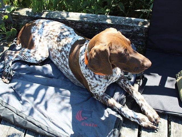 Outchair hundetæppe med varme, 120x90cm