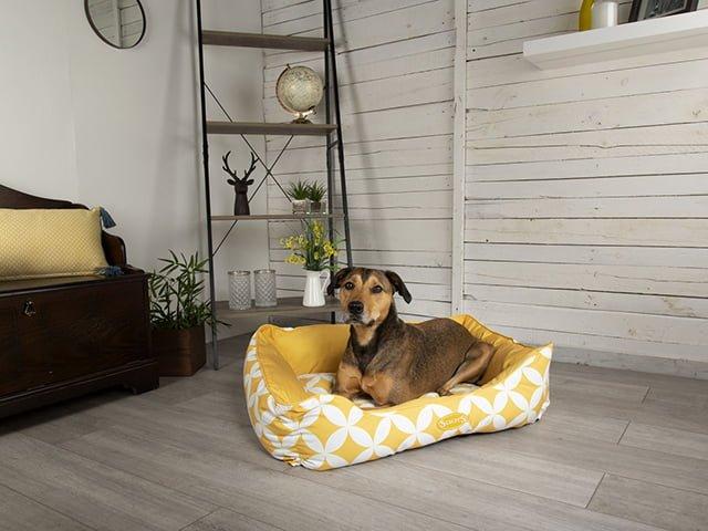Scruffs Florence seng, gul