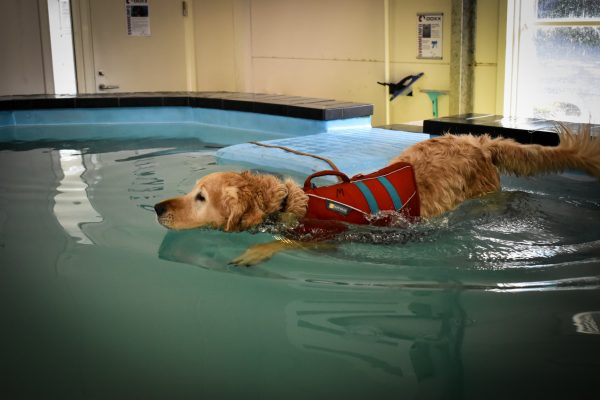 Swimming training strengthens the cooperation with your dog